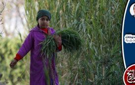 دور الفكر في حماية الثروتين العقارية والزراعية من تملك الأجانب